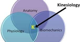 kiesiology
